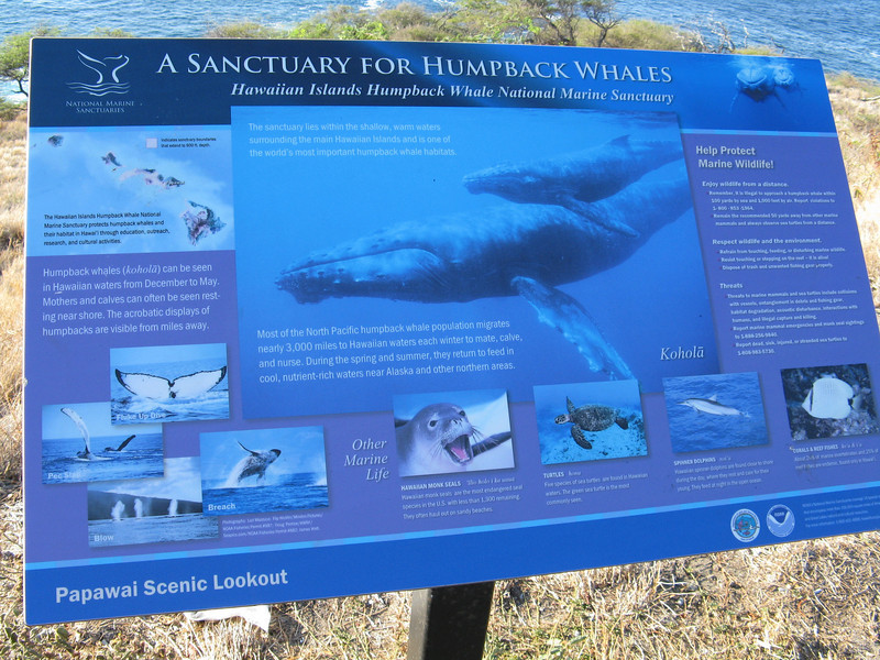 We headed over to Hana. We stopped along the road at a turnout and lookout where you can see whales during the winter months.