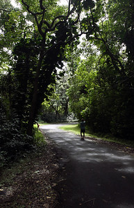 Nahiku Road