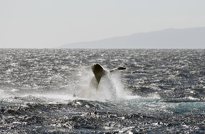 Whale Watching Cruise