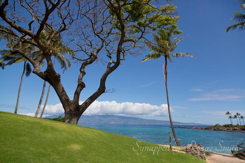 To the Sea<br /> <br /> Kapalua Beach on Maui