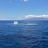 Having sailed on the surface looking for whales we're now waiting to submerge for a different view. Here the submarine is surfacing. The island of Molokai is in the background