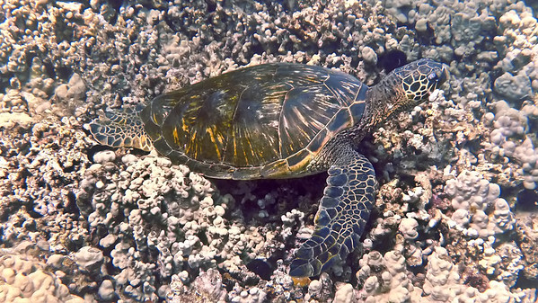 Maui Scuba Diving (Ed Robinson's)