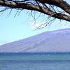 Maui 014
