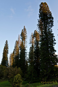 MauiSunrise101312-1