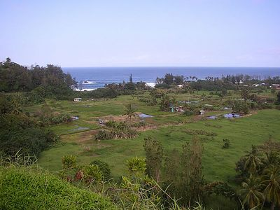 View from the Hana Highway of taro fields on the Ke'anae Peninsula.