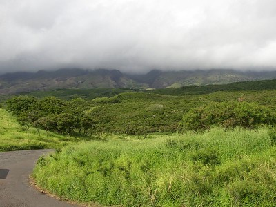And yes, everything is really this green.  This side of the island is newer than the east side and there's lava rock sticking up everywhere.  Perhaps that's why everything's so green.