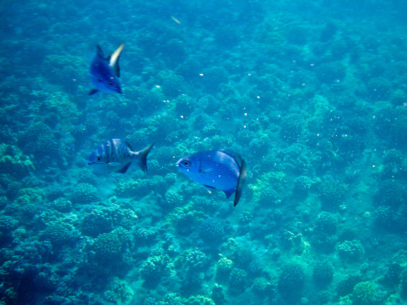 Snorkeling inside the Molokini Crater