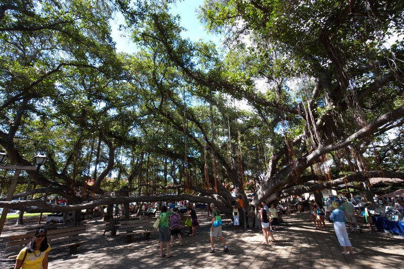 Banyan Tree Park, Laha'ina