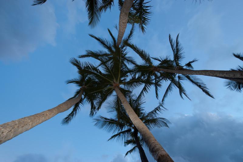 Palm Trees, Ma'alaea