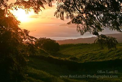 Sunset Through Jacaranda