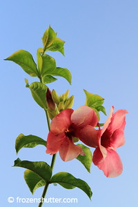 Blooming Pair