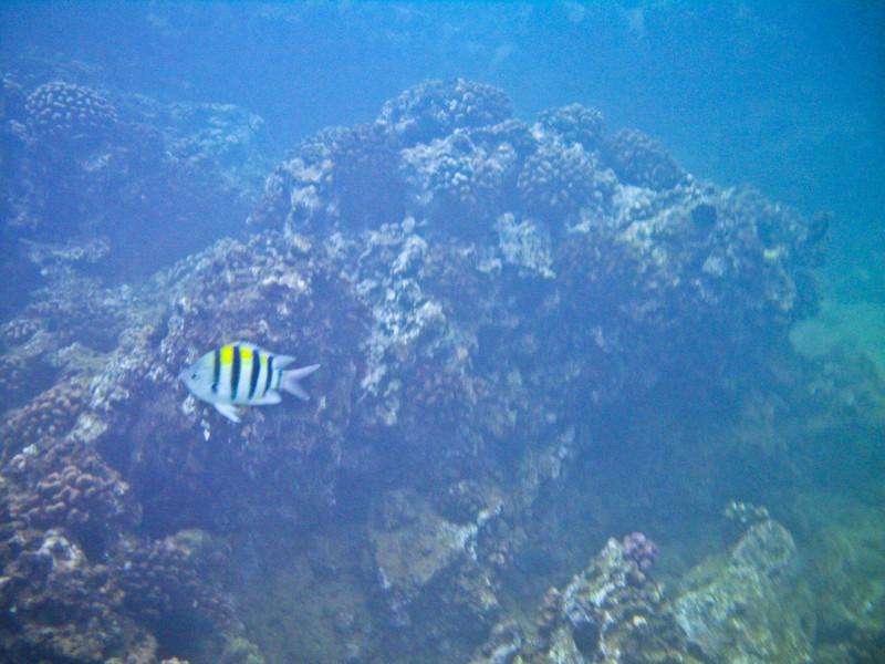 Snorkeling at Po'olenalena Beach