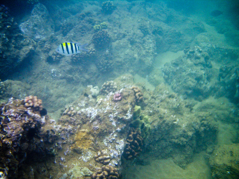 Snorkeling at Po'olenalena Beach