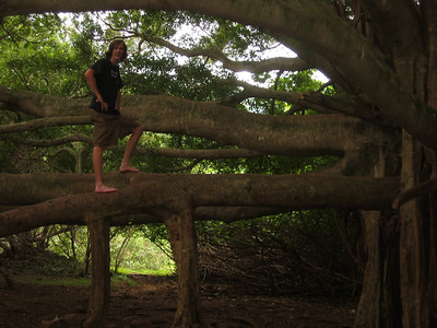 playing in the banyan tree