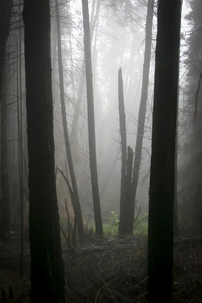 Kula Forest Reserve
