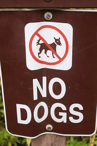 Especially spiky-tailed devil dogs.
