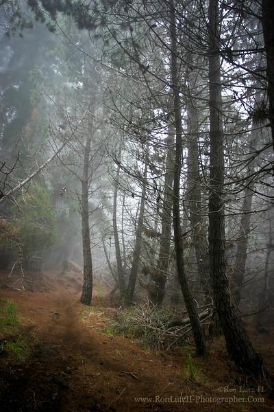 Waiohulu Trail