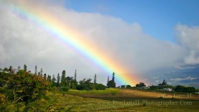 Olinda Rainbow