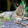 Wild Kitten of Maui