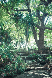 Cascavelle   Casela Bird Park