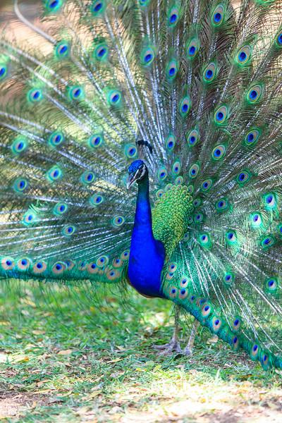 Cascavelle | Casela Bird Park