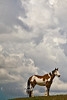 Beautiful Painted Horse along the Wyoming Plains