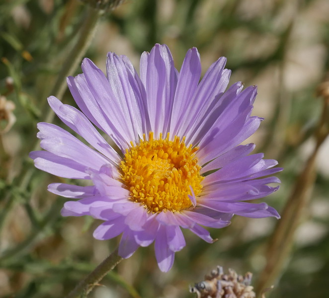 We saw these asters in a number of places along the trip.