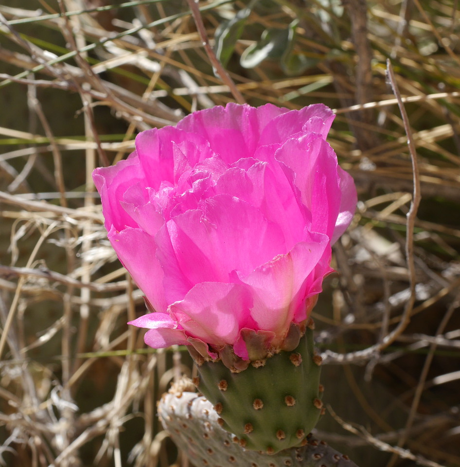 We saw this brilliant pink cactus flower as we drove onward and stopped.