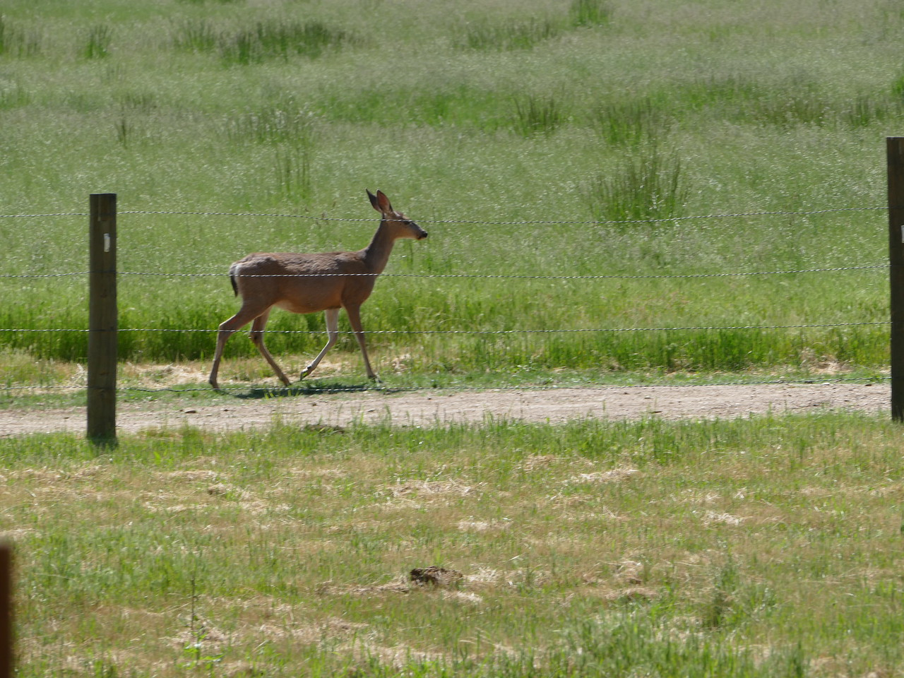 While we were there, a doe strolled by.