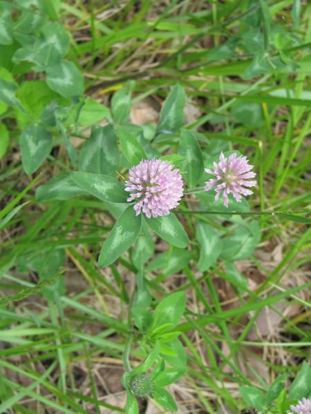 Unknown purple  flowers.