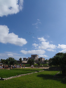 Pelicans over the Maya Ruins at Tulum