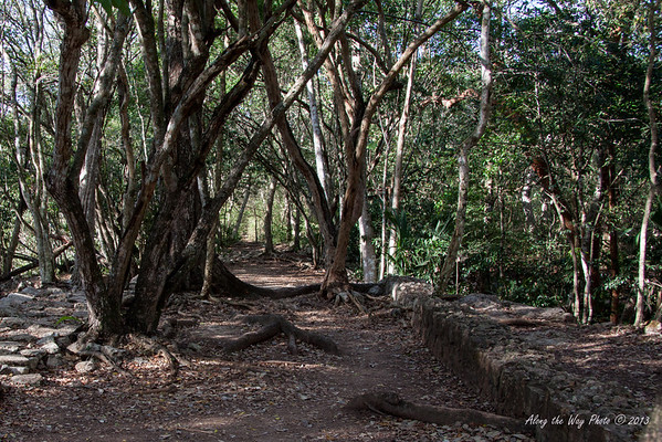 Yucatan-9685<br /> Pathways to the various ruins in Chichen Itza are cut through the jungle.