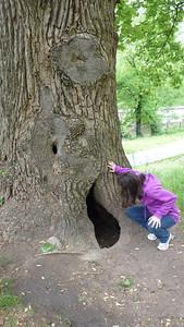 Diane looking for raccoons again.