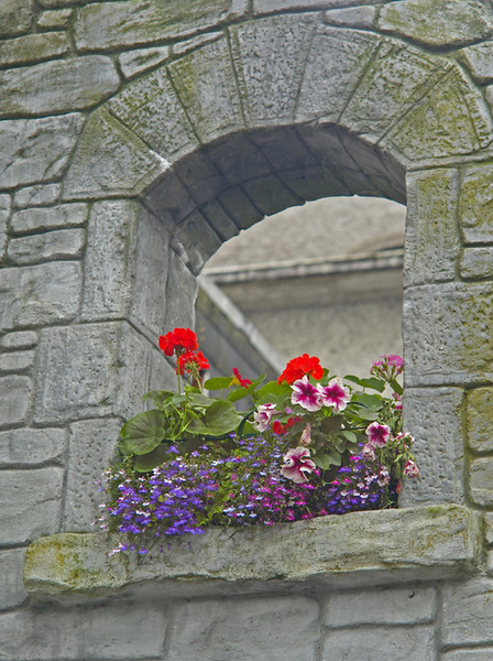 Window box in one of the Westport church arches.
