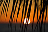 Burnished Palms