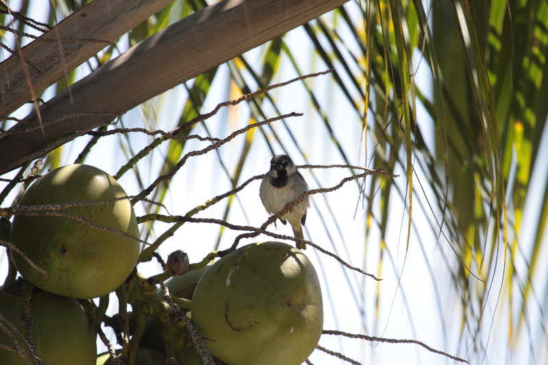 Put your bird in the coconut and shake it all up...