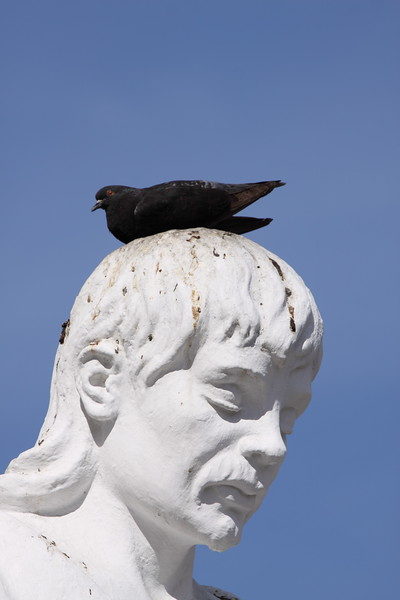 Don't know who the statue was, but the birds liked him!