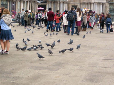 Pigeons are everywhere.