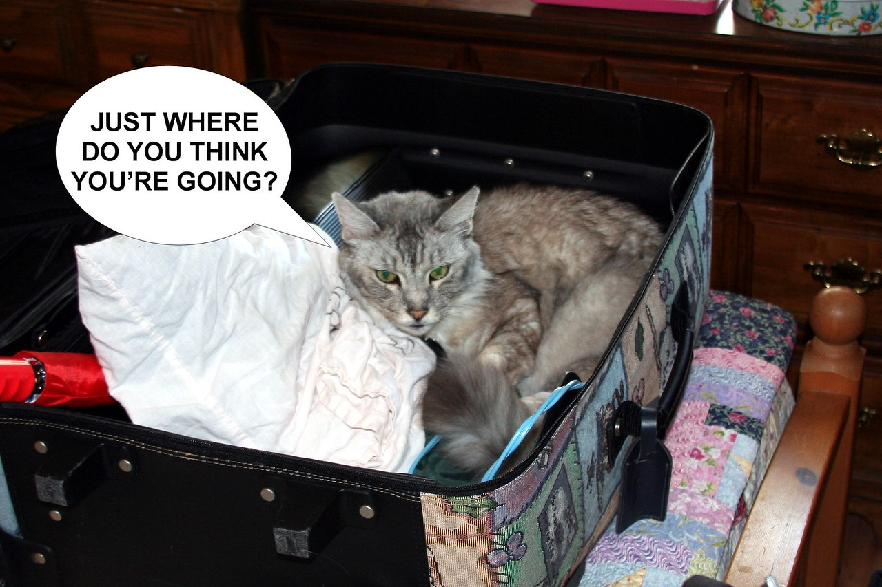This has become a routine whenever we pack to travel.  It's the traditional (guilt) trip before the trip.