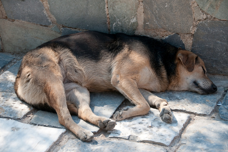 A  local dog catching up on its sleep in a shaded area.