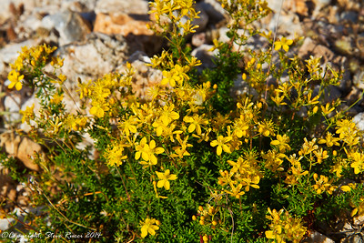 A wildflower in the hills of Crete