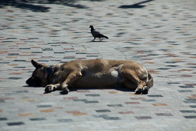 A dog snoozing in the plaza.  There was no shortage of stray dogs.