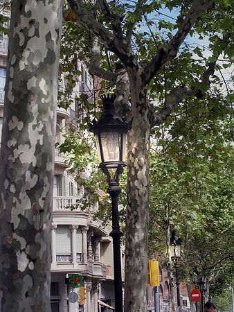 I was impressed by the bark on these trees along the boulevard.
