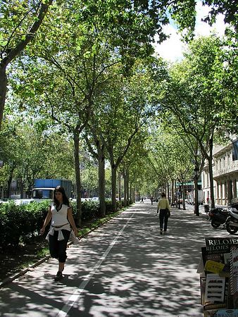 A beautiful wide boulevard in downtown Barcelona.
