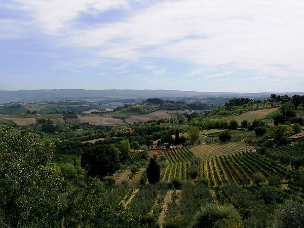 Vinyards in San Gimignano