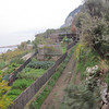 Gardens on the side of the mountain - layed out in tiers.