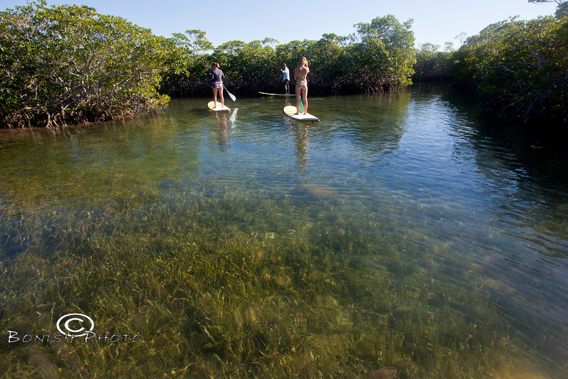 Stand Up Paddle Boarding through the Mangroves - Mellow Ventures Key West - Photo by Pat Bonish