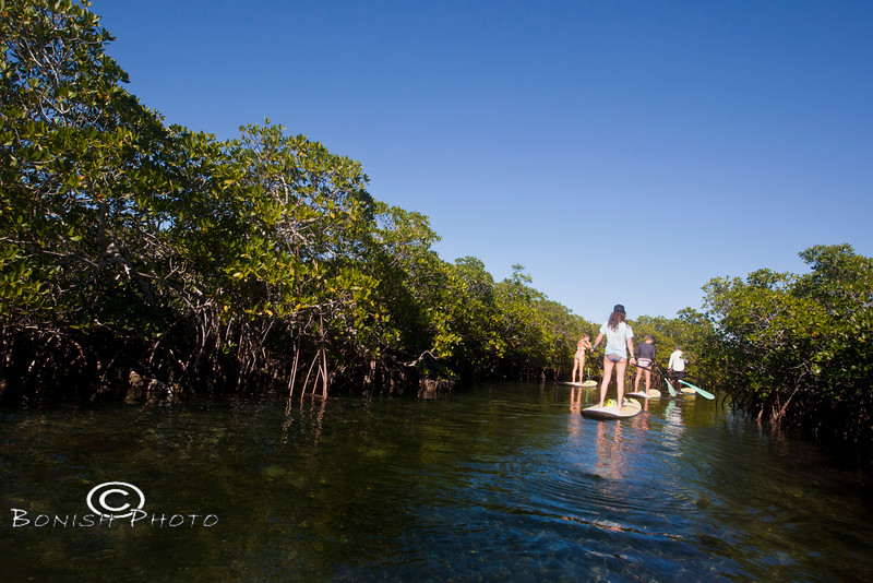 Paddling through the mangrove canals - Mellow Ventures Key West - Photo by Pat Bonish