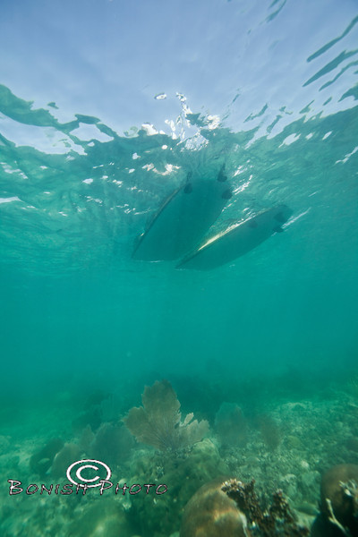 Paddling Boarding above the coral reef - Mellow Ventures Key West - Photo by Pat Bonish