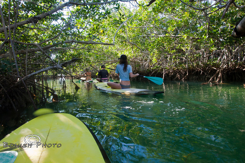 Mangrove Canals - Mellow Ventures Key West - Photo by Pat Bonish